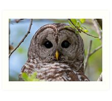 Barred Owl at McGregor Marsh Art Print