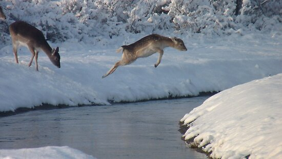 Jumping Fallow deer in the snow 4 by DutchLumix