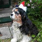 Rupert at Christmas by BronReid