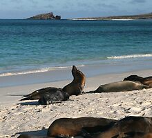 Sea Lions Lazing About by Jane McDougall