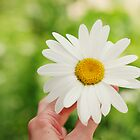 Daisy by photographyjen