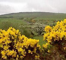 "Looking towards ""Milk Hill"" County Waterford. by Pat Duggan"