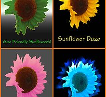 Four Way Sunflower by bicyclegirl