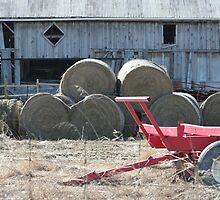 Farm Life by Lynn  Gibbons