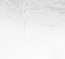 white one | tree in snow by jbalt