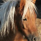 Portrait of a Mini Horse by livinginoz