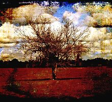 Cumulus by mtozier