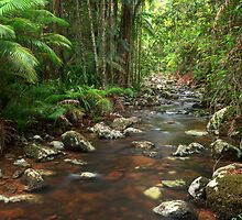 Rainforest Stream, Nightcap National Park by Harley Kingston