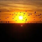 Seagulls at Sunset Huntington Beach by SprinkleLights