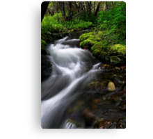 Little Lupin Creek Flow Canvas Print