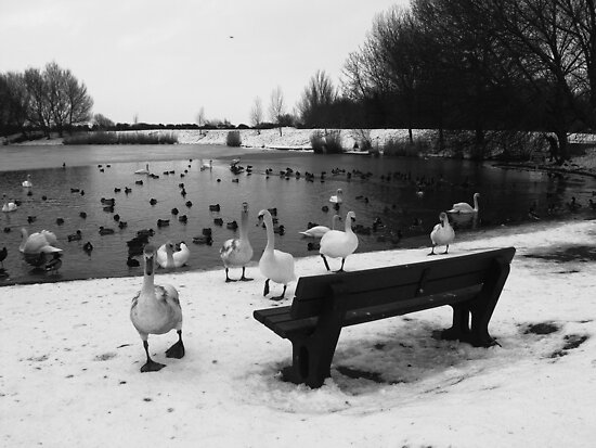 Attack of the Swans by Mjay
