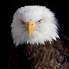 American Eagle Head Portrait by livinginoz