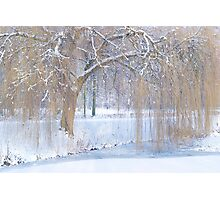 Snow in the willows Photographic Print
