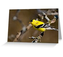 Male Gold Finch, Ottawa, Ontario Greeting Card