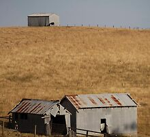farmscapes #71, lone cow by stickelsimages