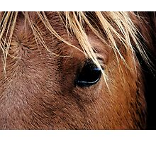 Eye of the Equine Photographic Print