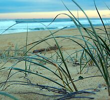 Dune Grass by Katherine Williams
