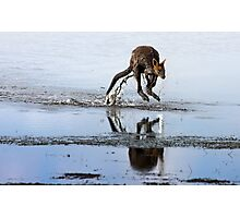 Wandering Wallaby Photographic Print