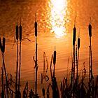 Bullrushes  at  sunset . Garadice Lake. Leitrim . Ireland by EUNAN SWEENEY