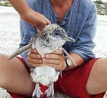 things you find on an australian beach by jeroenvanveen