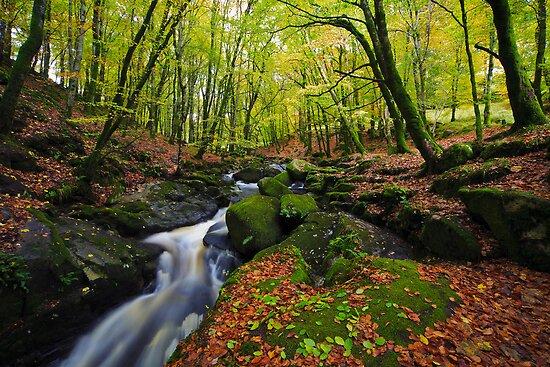 Mountain Stream. Cloghlea Co. Wicklow. Ireland by EUNAN SWEENEY