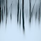 ghosts in the woods by Martin Pickard