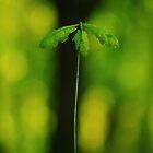 The  Mighty  Oak by EUNAN SWEENEY