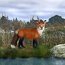 Red Fox by Walter Colvin