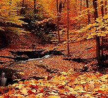 Colorful Hike by Sandy Woolard