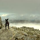 Tarn the Terrier... on Esk Pike by VoluntaryRanger