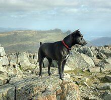 Tarn the Terrier... on Allen Crags by Jamie  Green