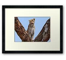 Female leopard, Okavango Delta Framed Print