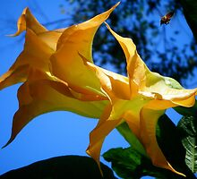 Yellow Trumpets. by Gabrielle  Hope