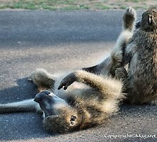 CHACMA BABOON – Papio ursinus - TOTALLY EXHAUSTED ! by Magaret Meintjes