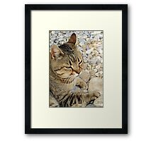 Relaxed Tabby Cat Against Stones and Pebbles Framed Print