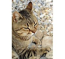 Relaxed Tabby Cat Against Stones and Pebbles Photographic Print