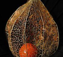 Alien Seed by Anina Arnott