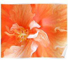 Orange Hibiscus Art Poster