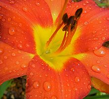 Full of Rain Drops. by Gabrielle  Hope