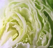 Half Lettuce 1 by Christopher Johnson