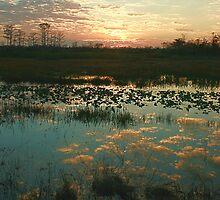 Reflection at Sunset, Palm Beach Gardens, FL by nancyb926