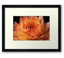 Orange Burst Framed Print