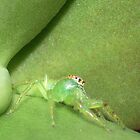 Green Jumping Spider by Edyta Magdalena Pelc