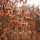 Lone Tree in the Woods by fizzyart