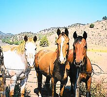 Three Amigos by © Betty E Duncan ~ Blue Mountain Blessings Photography
