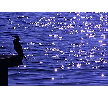 Stars on the water Photographic Print