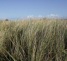 Tall grass by Debby Chadwick
