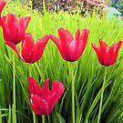 Red Tulips by Esperanza Gallego