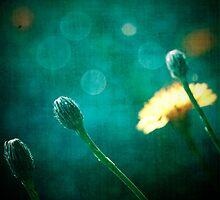 softly blue by Creative SweetArt
