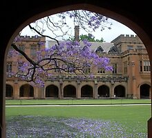 Sydney Uni pretty view to quadrangle by BronReid